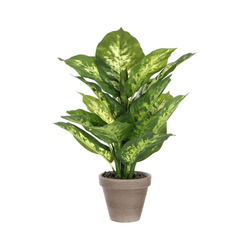 Mediashopping - Dieffenbachia artificiale in vaso