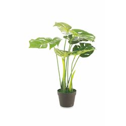 Mediashopping - Pianta monstera h70cm